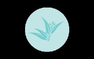organic eucalyptus essential oil